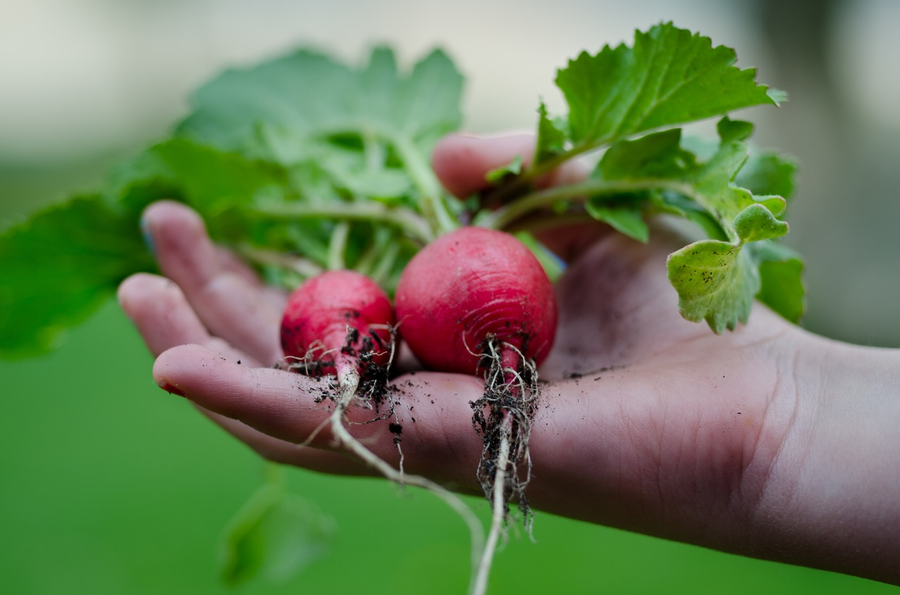 Learn how to start a vegetable garden. Get tips on which plants and herbs are the easiest to grow.
