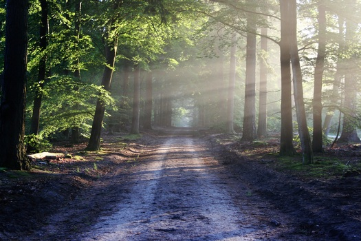 find your path to financial independence